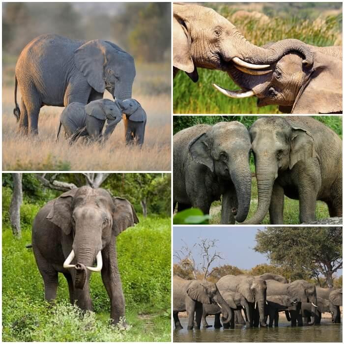 Dónde Viven Los Elefantes Hábitat De Los Elefantes