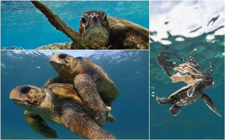 donde viven las tortugas marinas
