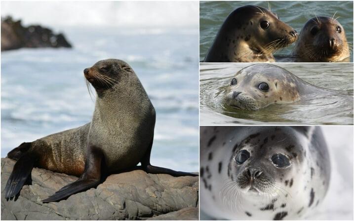 habitat de las focas