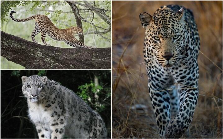 hábitat del leopardo