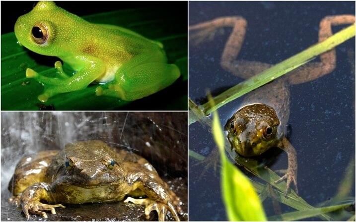 habitat de las ranas